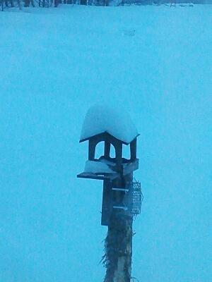 起きると積雪が・・・ snow falling!