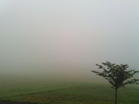 ひさびさに雲海の底です!